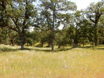 Photo of  Valley Creek Lane Redding CA