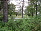 Lot 8 Black Butte Rd. Listing Photo