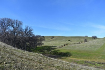 Photo of  Johnson Rd red bluff ca
